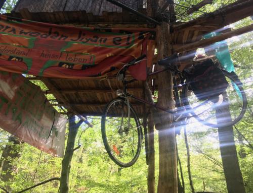 Fahrräder und Bäume werden unser Klima retten
